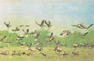 India Rajasthan, Bharatpur Bird's Sanctuary, Oiseaux