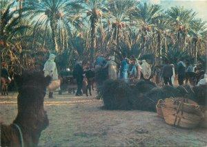 Postcard Africa native ethnic morocco  folklore ritual horse piazza square