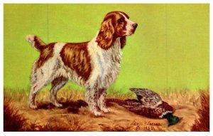 Dog , Cocker Spaniel , dead Pheasant