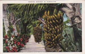 Growing Bananas In Florida 1938