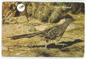 Vintage Postcard Roadrunner Road Runner Clown Of The West, Nature, Bird