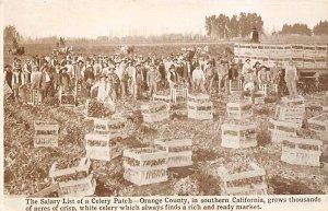 Celery Patch CA., USA Farming 1912