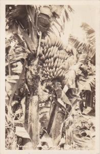 RP: Banana Tree , Hawaii , PU-1947