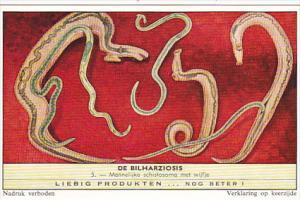 Liebig Trade Card s1751 Bilharziosis Parasite Disease No 5 Mannelijke schisto...