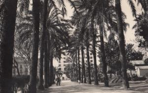 Malaga Jardines Del Parque Real Photo Old Postcard