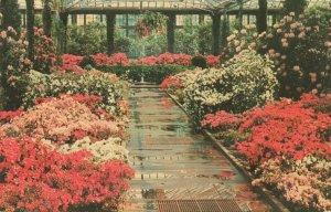 Postcard Longwood Gardens Kennett Square Pennsylvania