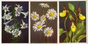 3 - Cards with Flowers