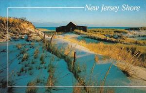 New Jersey Sand Dunes At The New Jersey Shore