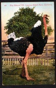 Cawston Ostrich Farm – Edward VII