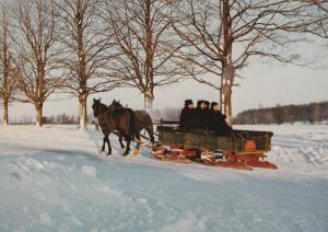 Mennonite Family Postcard Winter Scene Horses Canada