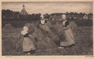 WALCHEREN, Zeeland, Netherlands; women in field, 00-10s