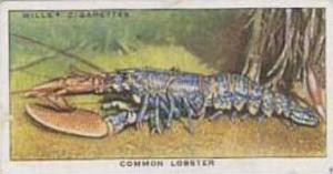 Wills Vintage Cigarette Card The Sea-Shore No 23 Common Lobster  1938