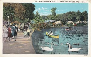 LOS ANGELES, California, 1900-10s; Winter Time In Westlake Park, Swans, Row Boat