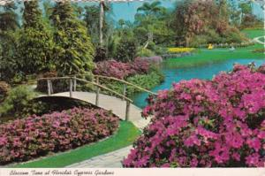Florida Blossom Time At Cypress Gardens 1976