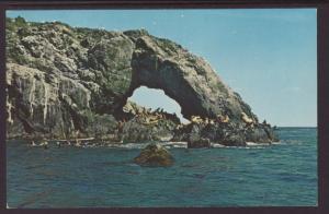 Sea Lions,Cape Chiniak,Kodiak,AK