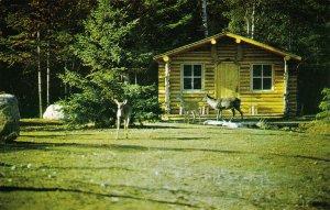 Zoo de St-Felicien Lac St-Jean, Quebec , 1950-60s