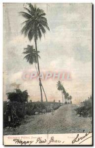 Old Postcard Cocoanut Palms Jamaica