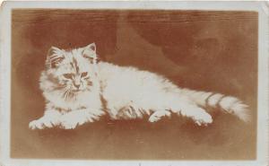 D57/ Cat Feline Animal Real Photo RPPC Postcard c1910 Long-Haired Cat Cute 3