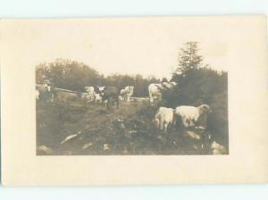 rppc c1910 MANY ANIMALS ON THE FARM AC8708