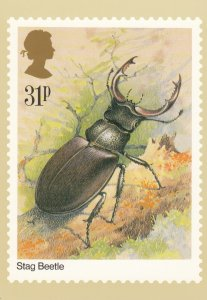 INSECT ; Stag Beetle , 1985