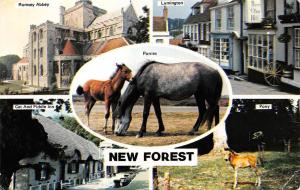 New Forest Pony Foal Ponies Romsey Abbey Lymington Cat and Fiddle Inn