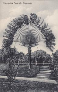 SINGAPORE, 1900-1910's; Impounding Reservoir