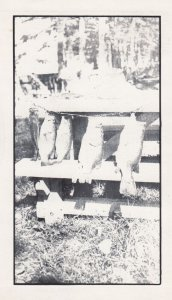 Hornbeak, Tennessee, 1954 ; Reelfoot Lake , Fishing Results