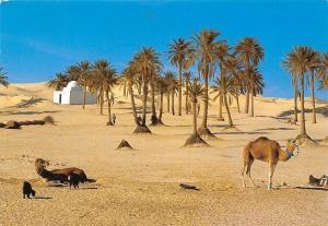 Tunisia El Faouar Sud Tunisien Sand Beach Palm Trees Camels