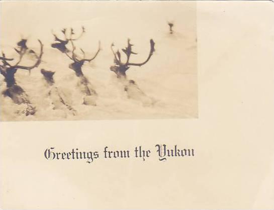 RP, Deers, Greetings From The Yukon, Canada, 1920-1940s