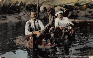 E56/ Foreign Postcard Carribean Panama  c1910 Alligator Hunter Caught  4