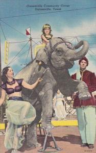 Performing Elephant Gainesville Community Circus Gainesville Texas Curteich