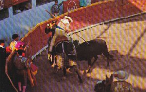 Mexico Bullfight In Old Mexico