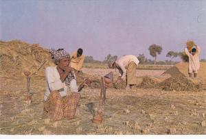 PAKISTAN, 1950-1970's; Harvesting, Man Smoking