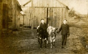 Children and Calves - Walter and Willis          *RPPC