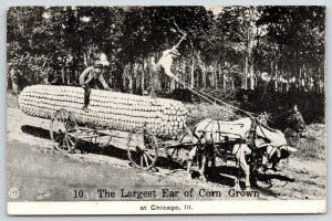 Largest Ear of Corn Grown at Chicago Illinois~Exaggerated On Horse Wagon~1913