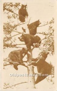 Real Photo Occupation and People Working Bears in Tree 1945