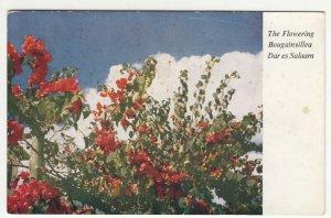 Tanzania; The Flowering Bougainvillea, Dar Es Salaam, No 1 PPC, Unused