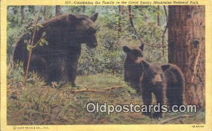 Great Smoky Mnt. National Park Bear Postcard,  Bear Post Card Old Vintage Ant...