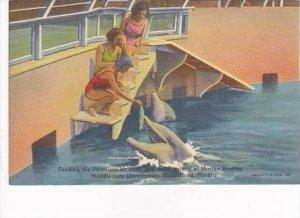Florida Marineland Feeding The Porpoises By Hand