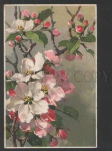 119305 APPLE FLOWERS by C. KLEIN vintage M.& L. #137 PC