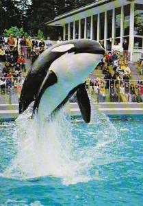 Canada British Columbia Vancouver Aquarium Killer Whale