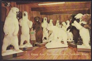 Knopp Bros Taxidermy Studios,Spokane,WA Postcard