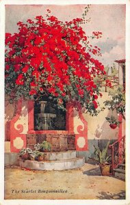 Portugal Madeira Flowers The Scarlet Bougainvillea postcard