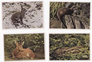 50 cards , Aus Wald und flur, Cigaretten-Bilderdienst, Animals of the world ,...