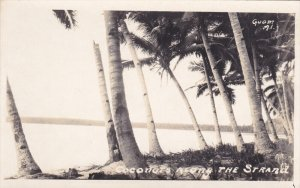 rp: cOCONUTS ALONG THE sTRAND , Guam , M.I. , 1910s
