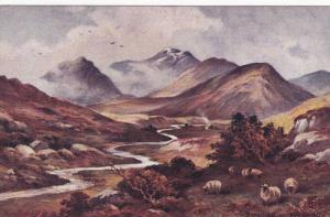 Sheep, Strathfillan, Perthshire, Scotland, UK, 1900-1910s