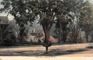 New Hampshire  Concord, Eddy Elm