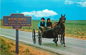 Amish Family Carriage Horse Buggy Intercourse Pennsylvaia Pa Postcard