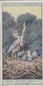 Wills Vintage Cigarette Cards Life In The Tree Tops Series No. 20 Young Heron...