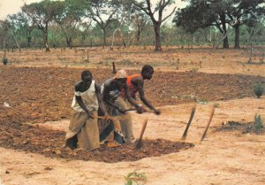Vintage Postcard, Gambian Girls hoeing in Unison, Farming, Gambia, Africa 89W